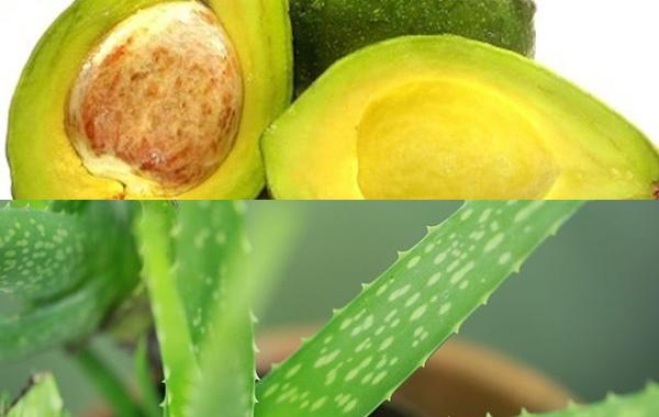 como-fazer-hidratacao-com-abacate-babosa-cabelos